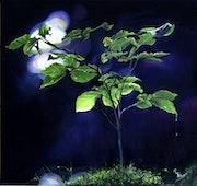 Lumière nocturne.