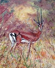 La gazelle (parc du Tsavo au Kenya).
