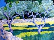 Enclos aux oliviers.