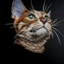 Le chat. Monde De Nine