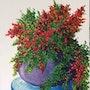 Petit bouquet d'automne / gouache sur papier aquarelle. Mariraff