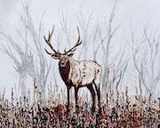 Elk!.