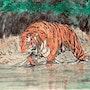 Da Brute - Big Tiger on the Prowl. Jabbyd