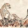 The Cheetah Queen. Jabbyd
