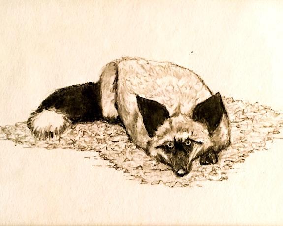 The Silver Fox Lays Low. Gerard Dourado Jabbyd