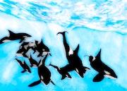 Orca Pod Underwater. Jabbyd