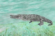 Sally the Saltwater Crocodile. Jabbyd