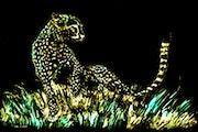 The Black Cheetah.