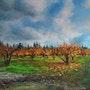 Cerisiers en automne à L'Isle-sur-la-sorgue.