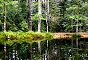 Lac de la Besace - Vosges. Pascaline
