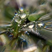 Perles cristalines. A'm