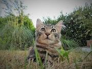 Photo chat - Malice.