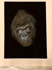 Kong. Isabelle Lebrethon