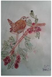 Petit oiseau. Fatima Medjahed