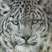 Regard de léopard des neiges.