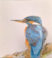 Le colibri.
