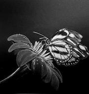 La fleur et son papillon.
