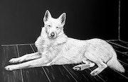 Le chien blanc.