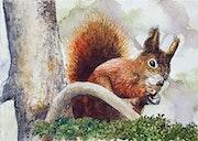 Écureuil. Marc Pfund