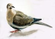 Hier, un pigeon téméraire s'est posé sur ma table.