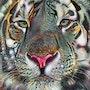 Obongo, tiger - Mix media - 70 X 55 cm. Léa Roche