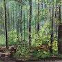 Jeune Forêt de l'Argonne. Catherine Souet-Bottiau