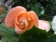 Fleur 20.