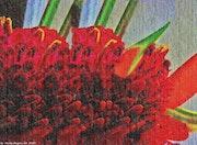 EB67-Heliconia en flor.