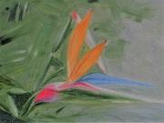 Strelitzia - oiseau de Paradis.