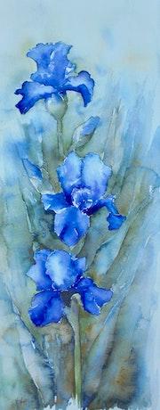 Les iris bleus.