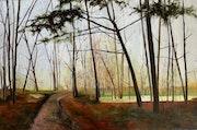 Wald im Hohen Fläming.