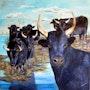 Les taureaux camarguais. Christian Pacaud