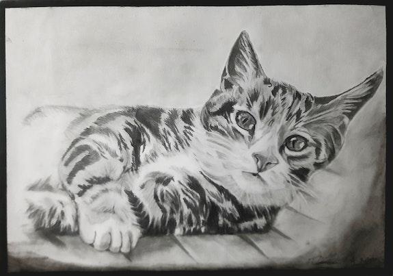 Gato. Honrado Canal Youtube Ruben Honr