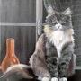 Le chat sur le rebord d'une fenêtre. Joelle Sieurin
