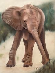 Jeune éléphant. Dany Serva