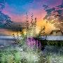 Flussaue im Nebel mit Sonnenaufgang. Juste