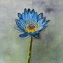 Le Lotus bleue. Patricia De Chadois