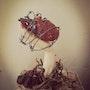 Les épines du coeur. Fabio Art Gallery