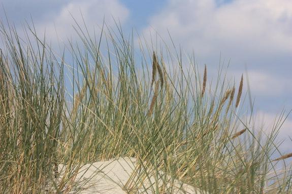 Végétation spécifique des dunes. Nathalie Hochard-Gaudry Nathalie Hochard-Gaudry