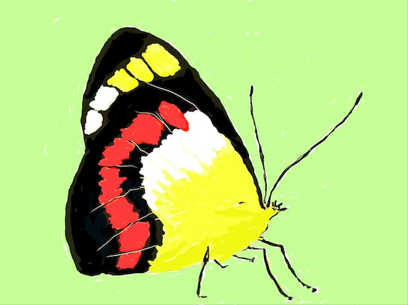 Union jack butterfly. Keith Goldie Keith Goldie