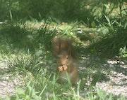 Les humains sont confinés alors j'en profite-Signé l'écureuil.