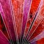 - Eclats- 50 X 50 cm - peinture sur verre inversé -. Brigitte Decobecq