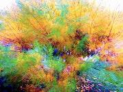 Série Végétale « explosion de couleurs ».