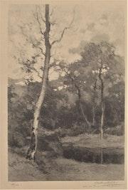 Albert. Philibert (1876-1938) : bouleaux près d'une mare.. Historien d'art, Archéologue; Chercheur Free-L.