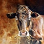 «Schokoladenbraune Kuh». Simone Wilhelms