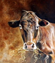 «Schokoladenbraune Kuh».