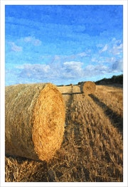 Summer Bales. David Lacey