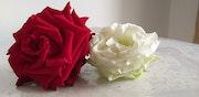 Deux roses.