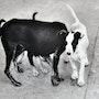 Nomad stray dog family. Barake Sculptor