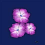 Les 3 fleurs au coeur de diamant.